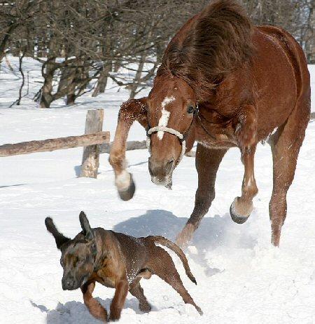 horse_chases_dog