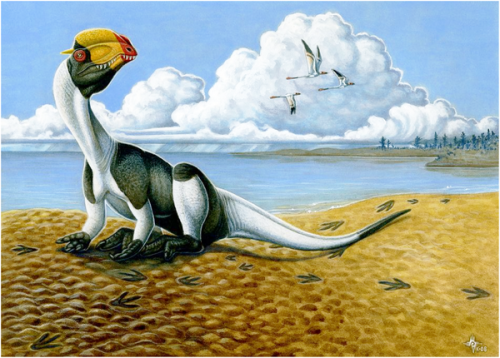 theropod resting