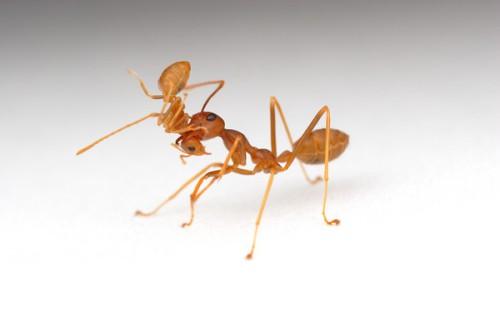 ant rescue