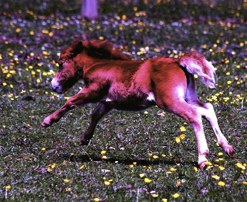 running ponies