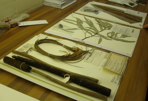 National Herbarium of New South Wales